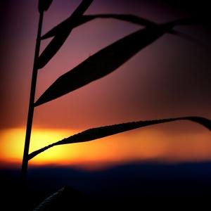 Ranajky v trave 28