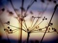Ranajky v trave 14
