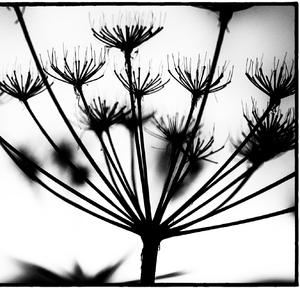 Drobnosti prirody 08