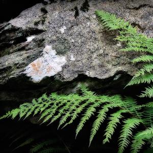 Drobnosti prírody 31
