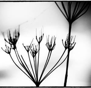 Drobnosti prirody 09
