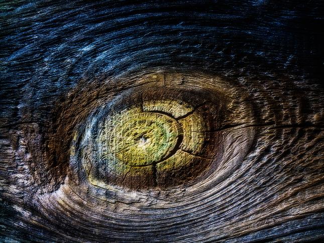 Krajina dreva 32