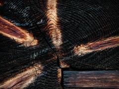 Krajina dreva 25
