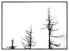 Tri stromy