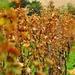 Túžba po víne