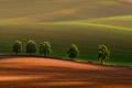 5 Moravských stromov