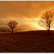 2 stromovka  - západovka