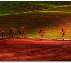 5 stromov moravských