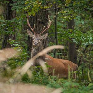 Kráľ slovenských lesov
