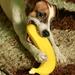 to je banán