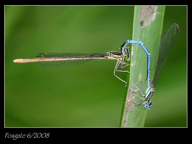 Vážky... viď podrobnosti