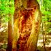cudny strom