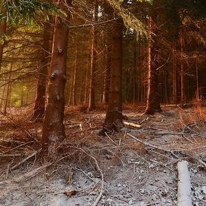 lesik na Kubinskej