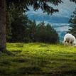Ovca :)