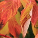 jesenny list