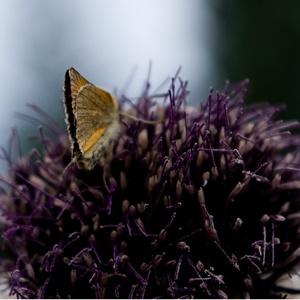Motýl a chlpáč