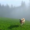 Stratená v hmle