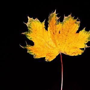 Chorá jeseň