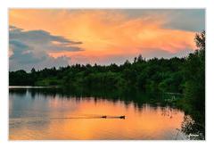 kačky na jazere