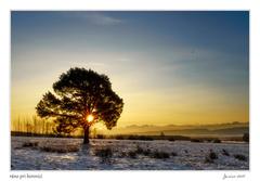 ráno pri borovici