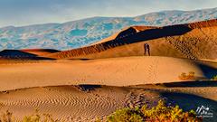 pusa na dunách