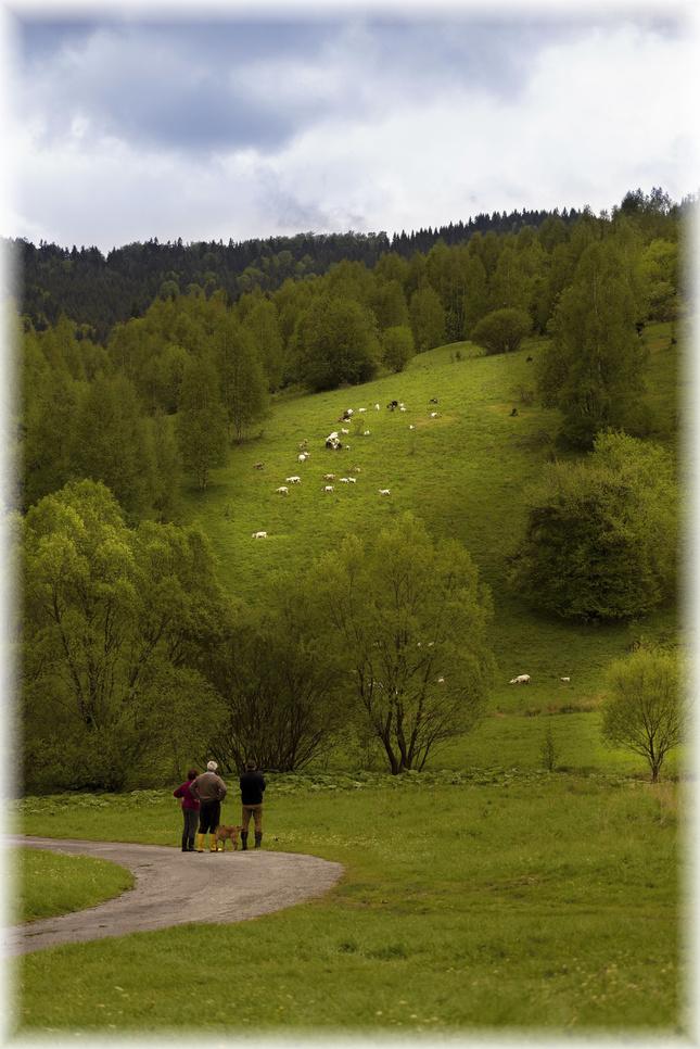 strážcovia ovečiek