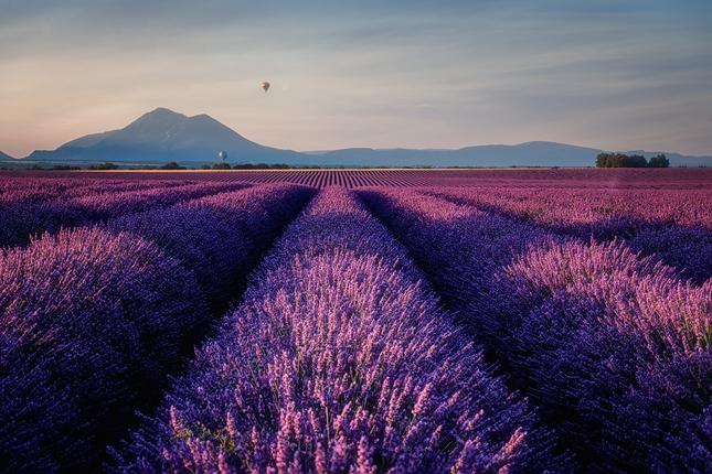 fialové ráno