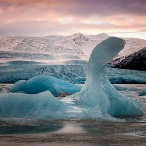 ľadová labuť