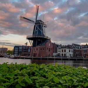 večerný Haarlem