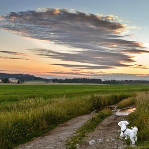 psí pohľad na zípad slnka