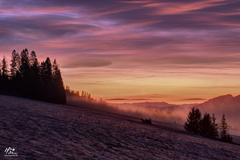 plamienky hmly