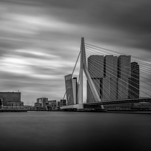 Rotterdamské zátišie