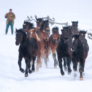 ... kone cválajú ...