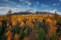 jesenný les