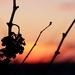 Posledné lúče jesenného slnka