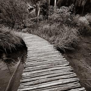 cesta do tajomného lesa...