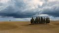 cyprusy pred búrkou...