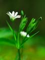 mekyho kvet...