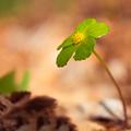 zelený kvet...