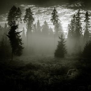 lesná hmlovka...