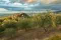 kraj za olivovníkmi...