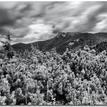 Kosodrevina, kopec, mraky :)