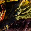 Farby jesene