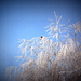zima na strome