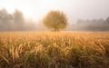 Žlté jesenné ráno