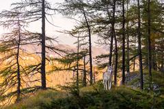 Strážkyňa lesa