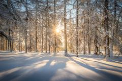 Zimné radovánky