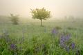 Jarná hmla