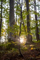 lesný život