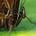 Exotický motýľ